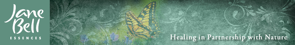 Jane Bell Essences - Healing in Partnership with Nature
